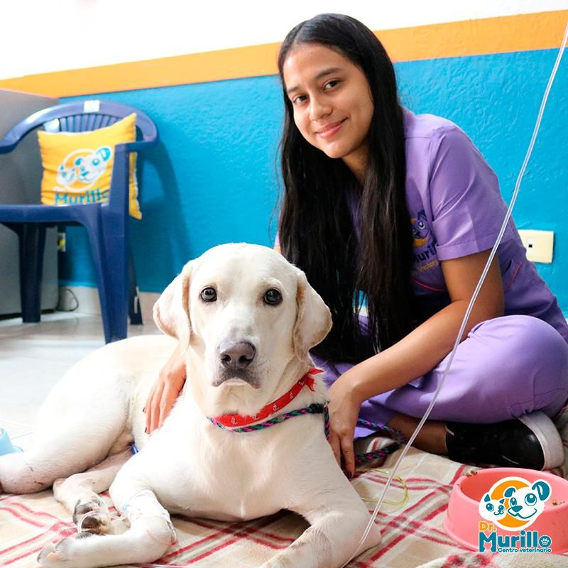 Hospitalizacion para Perro Cali Sur | amarilla.co