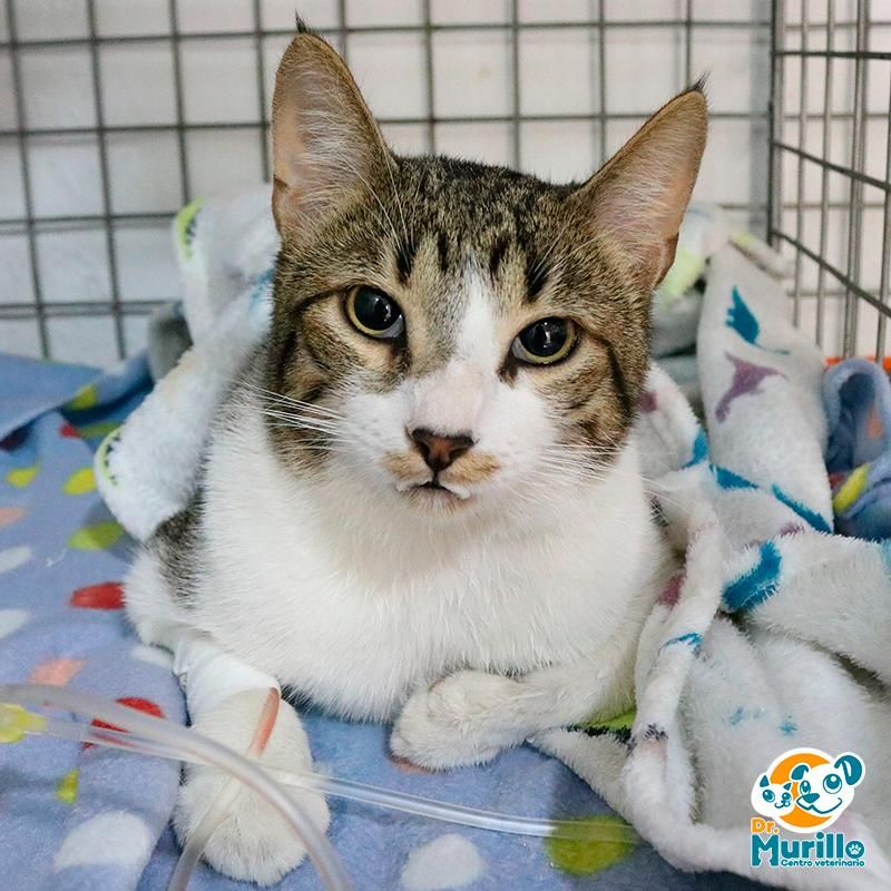 Hospitalizacion para Gatos Cali Sur | amarilla.co