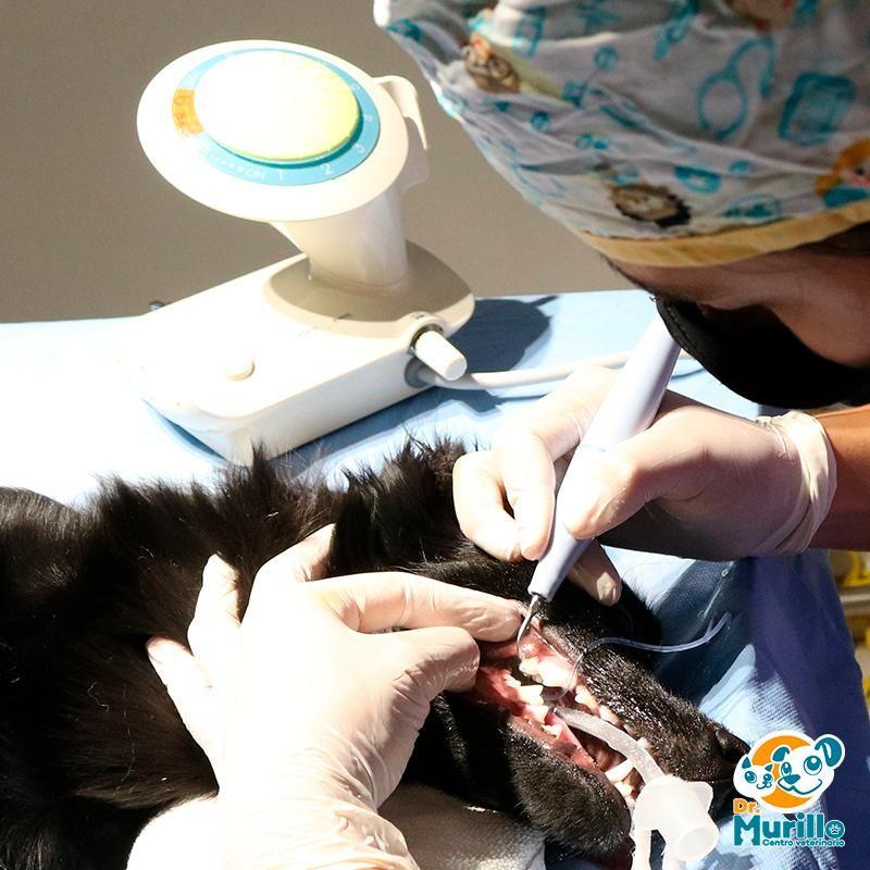 Profilaxis Canina Cali Sur | amarilla.co