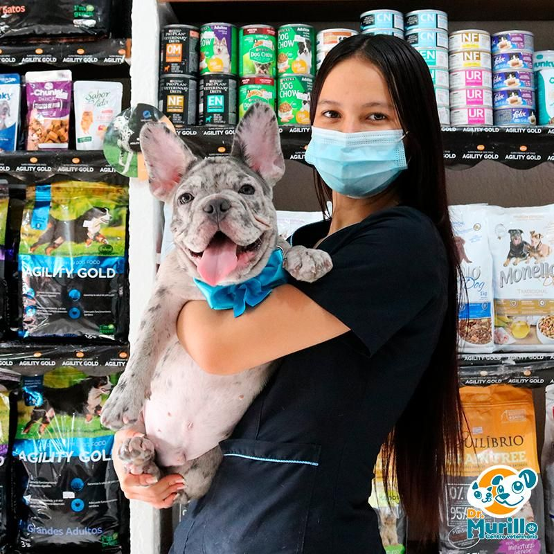 Pet Show Canina Y Felina Cali | amarilla.co
